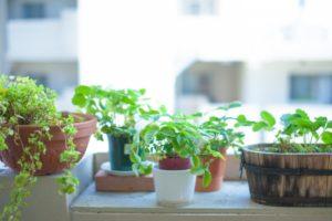 便利スタイル 観葉植物